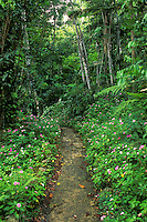 Big Tree rainforest hiking trail