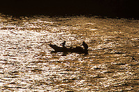 Egypt. Cruising the Nile from Kom Ombo to Luxor, passing Edfu and Esna. Fishermen at the Nile.