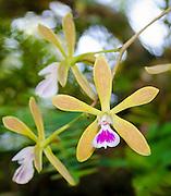 Rareorchids Florida johnobcarlos johnbob carlos gladesman glades everglades