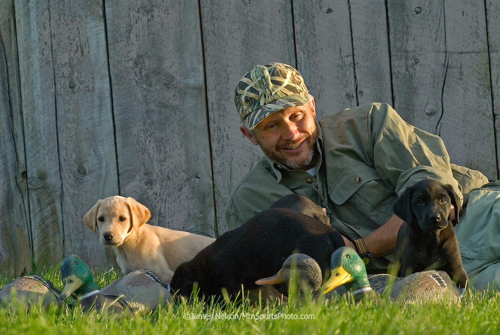 Dog trainer with Labrador puppies.