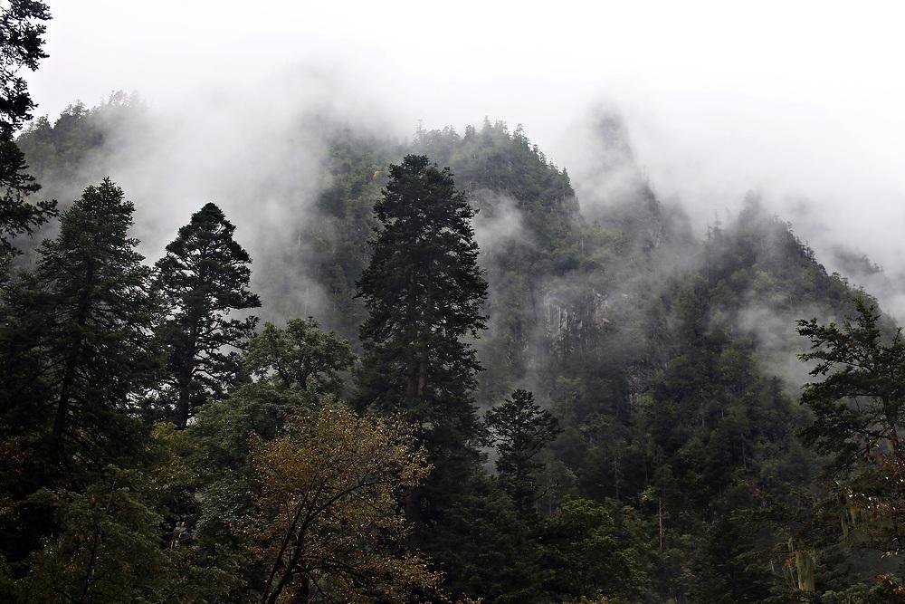 Mists outside Yubeng, Yunnan, China; September, 2013.