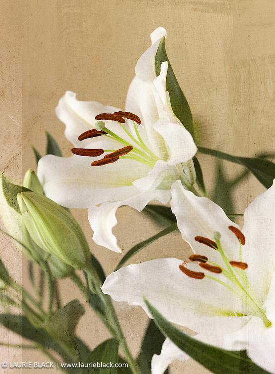 Fine art photograph of flowers