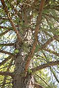 college green, Mapp Athens, summer, Tree Tour, European Larch