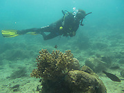 Scuba divers in a marine habitat with little life.