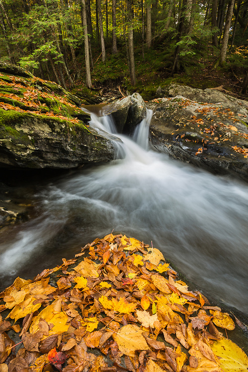 Bingo Creek autumn foliage, Green Mtn. National Forest near Rochester, Vermont
