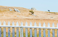 A white picket fence and landscape beyond at the American Camp National Historical Park, San Juan Island, Washington, USA.
