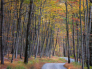 Fall trees in the Catoctin Mountians in Frederick, Maryland.
