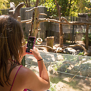 July 13-16, 2016, San Diego, CA:<br /> Alaina Stipcak looks at the Panda bear at the San Diego Zoo during a trip to San Diego, California Wednesday, July 13 to Saturday, July 16, 2016. <br /> (Photos by Billie Weiss)