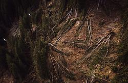 THEMENBILD - eine Schneise der Verwüstung hinterliess der Sturm Vaia in Norditalien - geknickte und entwurzelte Bäume, aufgenommen am 13. Januar 2019 in Predazzo, Italien // Kinked and uprooted trees, a trail of devastation left the storm Vaia in northern Italy near Predazzo, Italy on 2019/01/13. EXPA Pictures © 2019, PhotoCredit: EXPA/ JFK