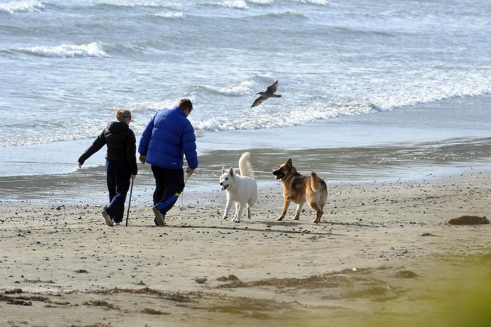 Dogs on beach, seashore, Titahi Bay, Wellington, New Zealand, Thursday, July 18, 2013. Credit:SNPA / Ross Setford