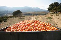 Trailer with oranges