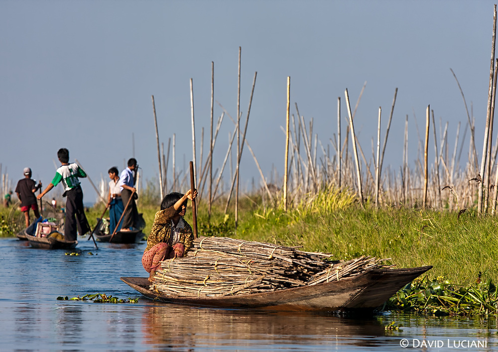 The boats are means of water transport on Inle lake. Behind the boat driven by a woman you can see swimming gardens.