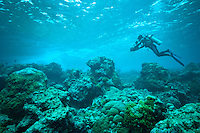 Underwater cameraman filming above a reef, Mapia Atoll, West Papua, Indonesia.