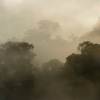 Morning sunlight scarcely penetrates the dense mist rising from virgin rainforest in the proposed Ulu Baleh National Park. This area is located deep in the remote interior of Sarawak, close to the geographic center of Borneo. Sarawk, Malaysia.