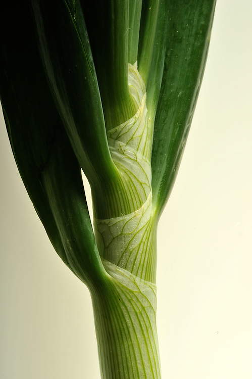 Closeup of a leek