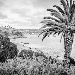 Laguna Beach California black and white photo with palm trees, Pacific Ocean, and the Orange County coastline.