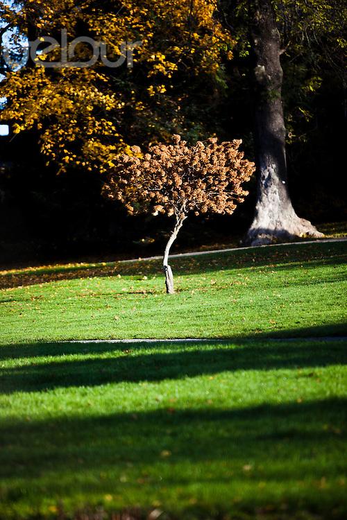 Tre i botanisk hage på Tøyen om høsten