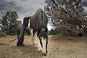 Dr. Lorin Lindner grazes with Tara and Tie. Tara was rescued after being left for dead by a Premarin facility where mares are forced into perpetual pregnancy so that their urine can be collected to be used in pharmaceuticals. Emaciated and pregnant at rescue, she soon gave birth to Tie Dye. Once the two were brought to Lockwood Animal Rescue Center, Tara was nursed back to health.
