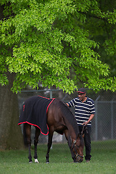 Kentucky Derby 139 entrant Orb grazed in a paddock with Julio Gondule after workouts Friday, May 03, 2013 at Churchill Downs in Louisville. Photo by Jonathan Palmer