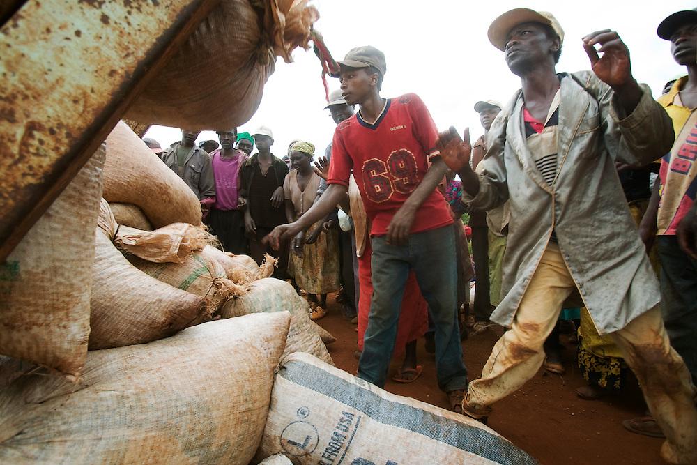 Africa, Kenya, Ruira, Pickers sort through bags of harvested Arabica coffee beans on Socfinaf coffee plantation outside Nairobi