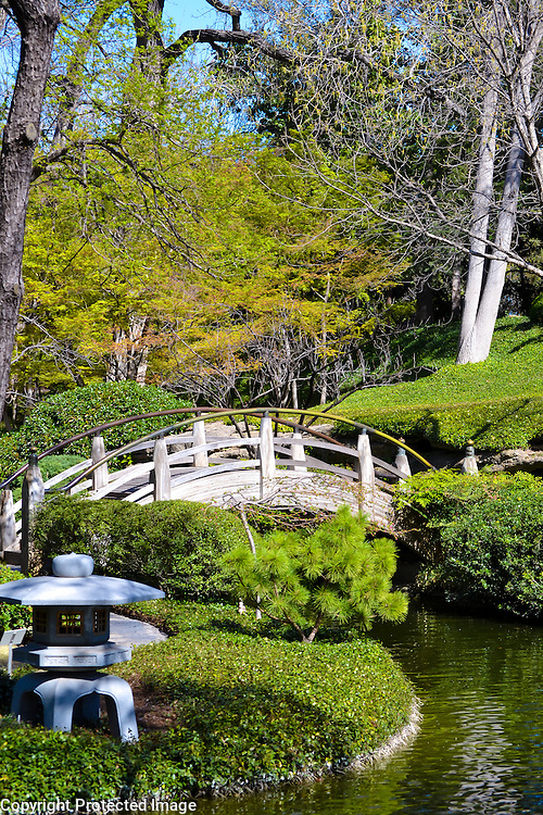 Japanese Gardens, located in Ft. Worth, TX