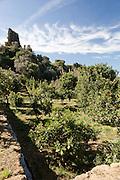 Agrigento, Valle dei Templi. Agrumeto del Giardino della Kolymbetra. Proprietà FAI. ©2012 Vince Cammarata | FOS