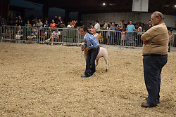 07 August 2015:   McLean County Fair - Sheep showing & judging