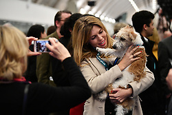 © Licensed to London News Pictures. 13/12/2019. London, UK. CARRIE SYMONDS WITH HER DOG DILYN at the General Election count for the constituency of Uxbridge and South Ruislip. A general election was called for December 12th following a deadlock in Parliament over the UK's decision to leave the EU. Photo credit: Ben Cawthra/LNP