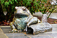 Bronze frog statue at Bellevue Botanical Gardens - closeup