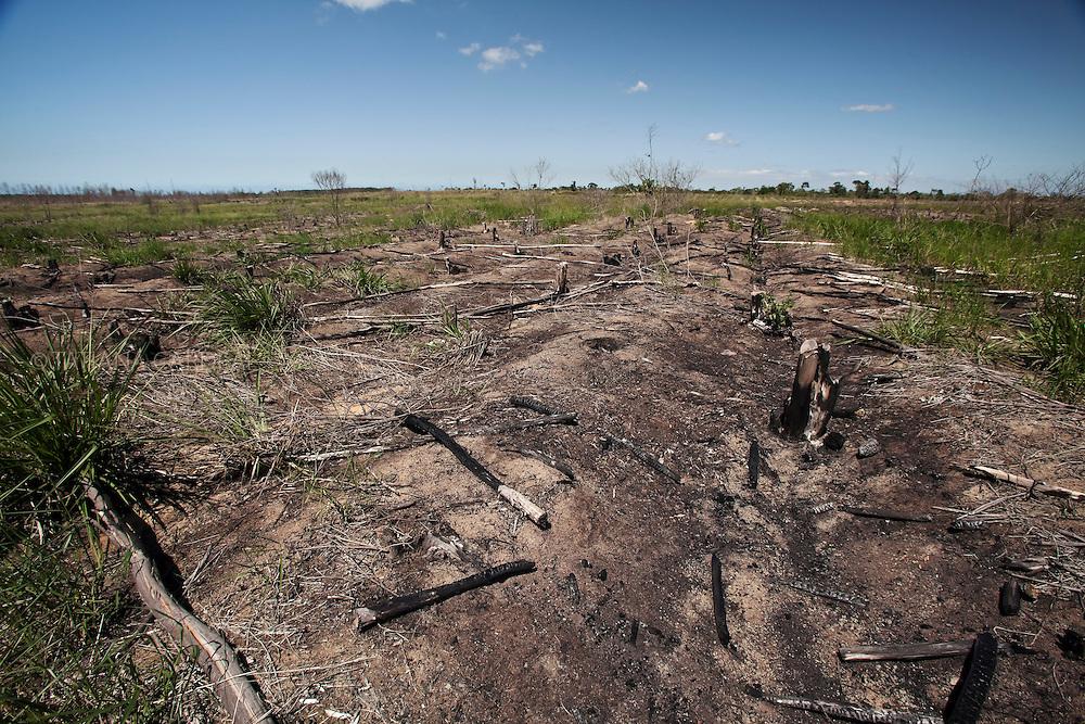 Obrigada pela justiça a devolver a terra aos índios, a Aracruz-Fibria não retirou as raízes dos eucaliptos, o que inviabiliza a agricultura  nas terras indígenas em Aracruz (es).