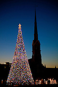 Fairy lights decorate a christmas tree in Marion Square Charleston, SC. The steeple of the Citadel Square Baptist Church is in the background. (photo by Charleston SC photographer Richard Ellis)