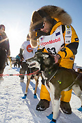 Musher Michi Konno at the Iditarod Ceremonial Start Race 2018.<br /> <br /> Photographer: Christina Sj&ouml;gren<br /> Copyright 2018, All Rights Reserved