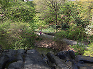 On top of the waterfall in the Hallett Nature Sanctuary in Central Park
