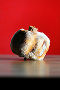 rotting with fungus molt covered passion fruit