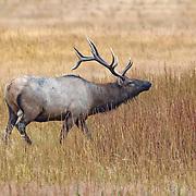 Mammals Other