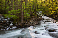 The sun rises over the middle fork of the Little Pigeon River as seen within the Greenbrier area of Great Smoky Mountains National Park.