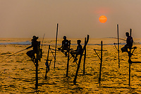 Stilt fishermen, south coast of Sri Lanka.