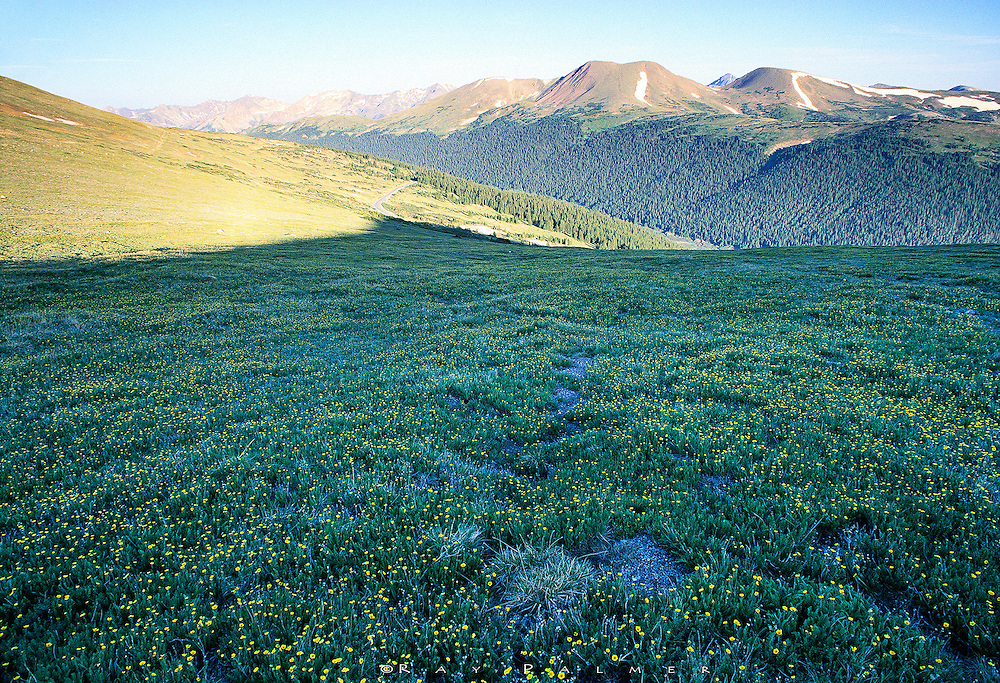 Rocky Mountain NP, Colorado RP09254.<br /> <br /> Wildflowers carpeted this meadow, still deep in shadow, near Forest Canyon Pass in Rocky Mountain National Park. The Cache la Poudre and Colorado Rivers haunt the bottoms of the valleys; the Never Summer Range fades southward.<br /> Nikon F5, Nikkor 17-35 f/2.8, 1/5@f/16, Velvia