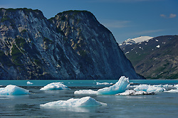 Icebergs flowing out of the McBride Glacier inlet begin their journey down the Muir Inlet in Glacier Bay National Park and Preserve in southeast Alaska. In the background is White Thunder Ridge. As late as 1966, the faces of the retreating McBride and Riggs Glaciers were across from White Thunder Ridge. In 2011, the terminus of McBride Glacier is roughly 3.5 miles away. McBride Glacier is the only remaining tidewater glacier in the Muir Inlet.