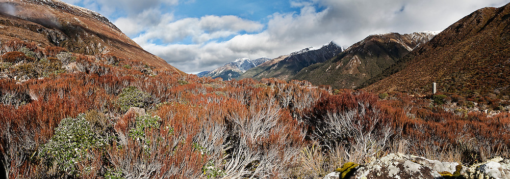 panoramic view of national park with red inaka scrub in the foreground of this mountain scene, arthurs pass, new zealand