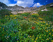 Wildflowers in Monte Christo Gulch near Breckenridge, Colorado