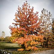 I colori dell'autunno nel Parco Nord di Milano<br /> <br /> The autumn colors in Northern Park in Milan