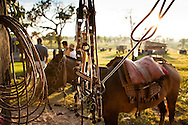 The warm afternoon sun shines off a lasso and tack after its long day of use on its horse in the Bolivian Amazon.