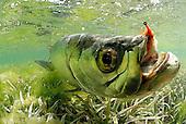 Los Roques fishing