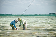 "A Bahamian bonefish is released on Andros Island's famous ""West Side""."