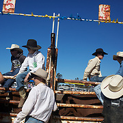 Young Cowboy's await near the schute for the the Novice Bull Riding event during the Branxton Rodeo at Branxton, Hunter Valley,  New South Wales, Australia, on Saturday 17th October 2009.  Photo Tim Clayton.