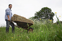 Man transporting hay on wheelbarrow in field