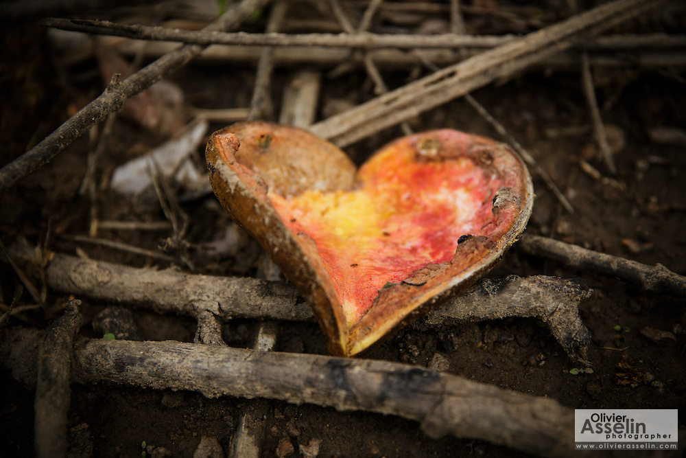 A seed pod in the shape of a heart rests on the forest floor in Katiola, Cote d'Ivoire on Friday July 12, 2013.