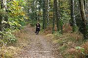 Nederland, Nijmegen, 30-10-2016Dit weekeind gaf prachtige herfstdagen.Mensen wandelen soms met hond of kinderwagen, door het kleurrijke bos.FOTO: FLIP FRANSSEN