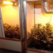 NLD/Weesp/20060209 - Hennepkwekerij gevonden door politie Nijverheidslaan Weep, planten, lampen, kweek, hasj, weet, wiet, cannabis, knop,